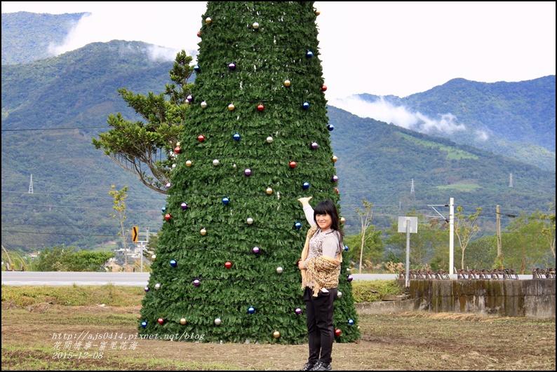 2015-12-富里花海25.jpg