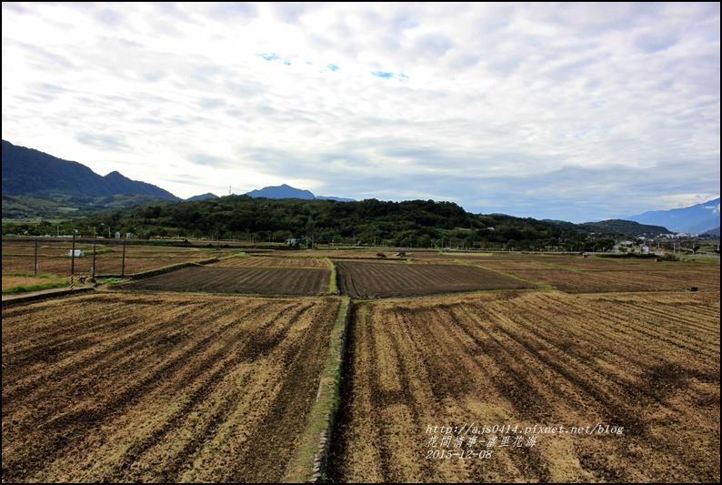 2015-12-富里花海10.jpg