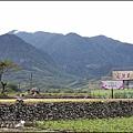 2015-12-富里花海19.jpg