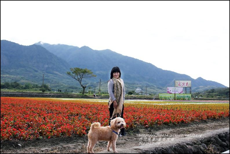 2015-12-富里花海21.jpg