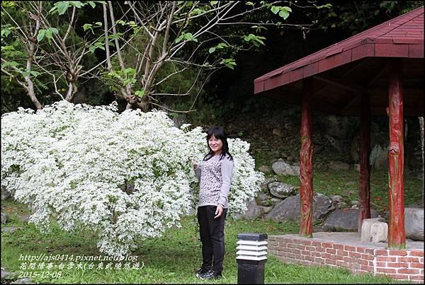2015-12-白雪木(台東武陵悠遊)8.jpg