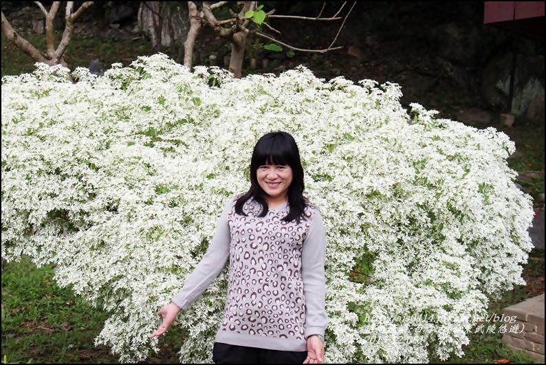 2015-12-白雪木(台東武陵悠遊)10.jpg