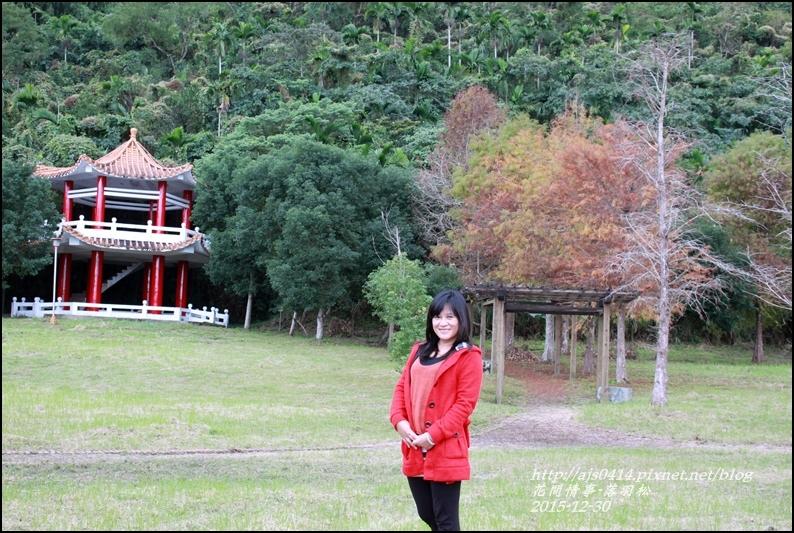 2015-12-落羽松之美1.jpg