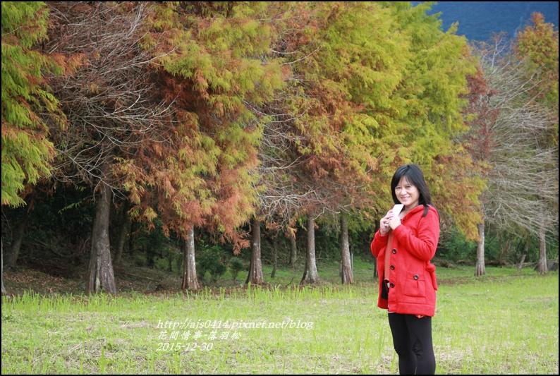 2015-12-落羽松之美4.jpg