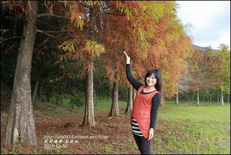 2015-12-落羽松之美10.jpg