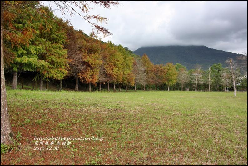 2015-12-落羽松之美16.jpg