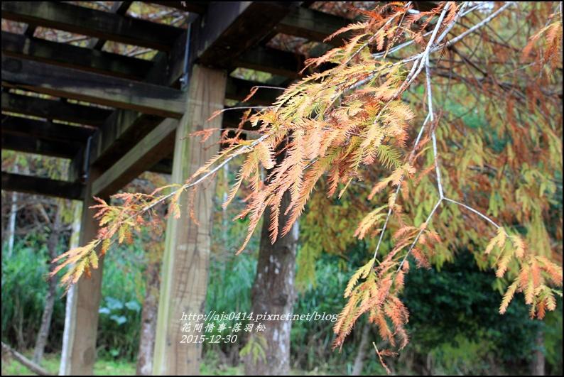 2015-12-落羽松之美19.jpg