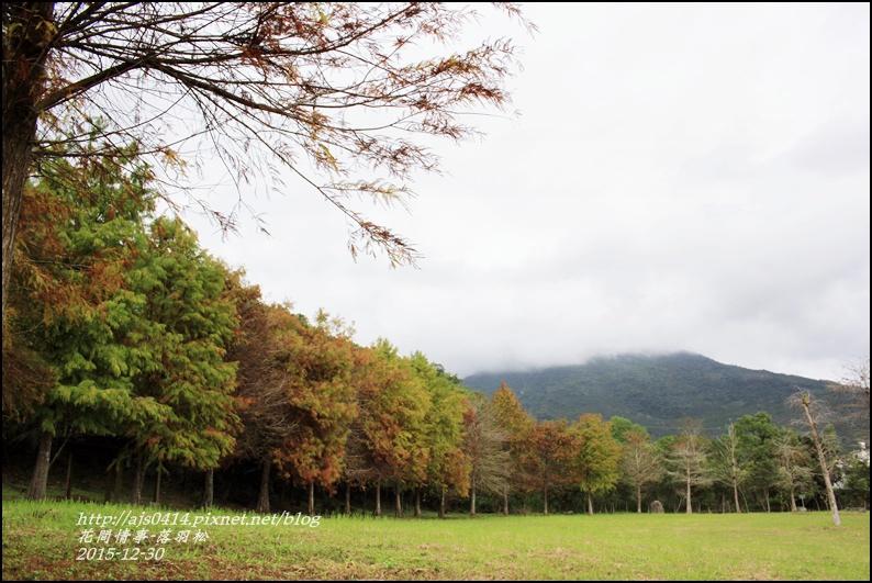 2015-12-落羽松之美22.jpg