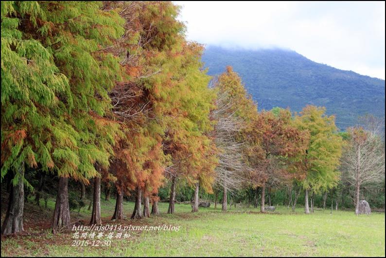 2015-12-落羽松之美23.jpg