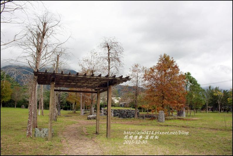 2015-12-落羽松之美25.jpg
