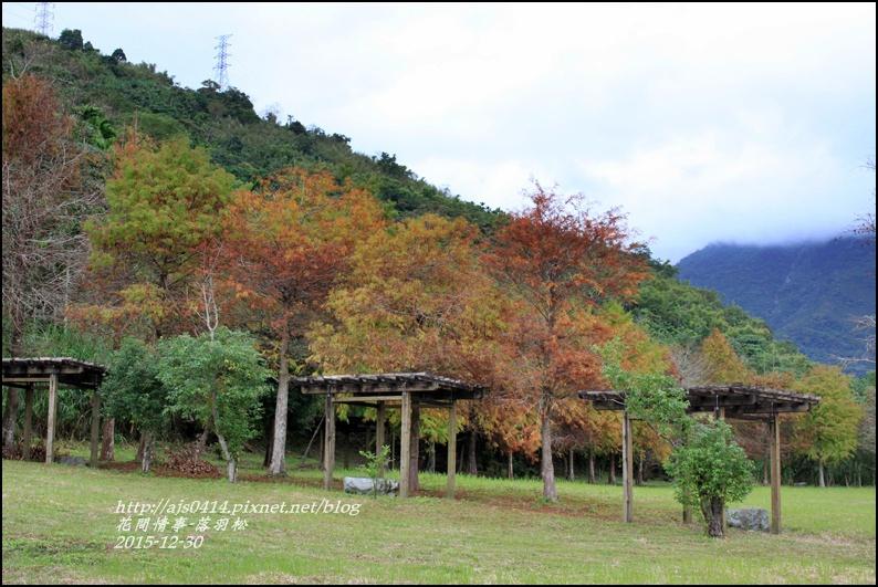 2015-12-落羽松之美28.jpg
