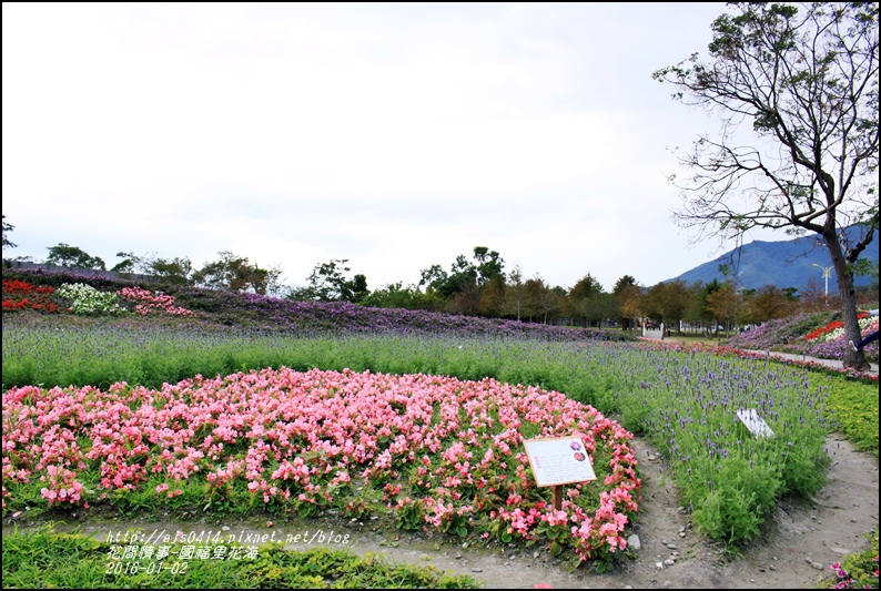 2016-01-國福里花海19.jpg