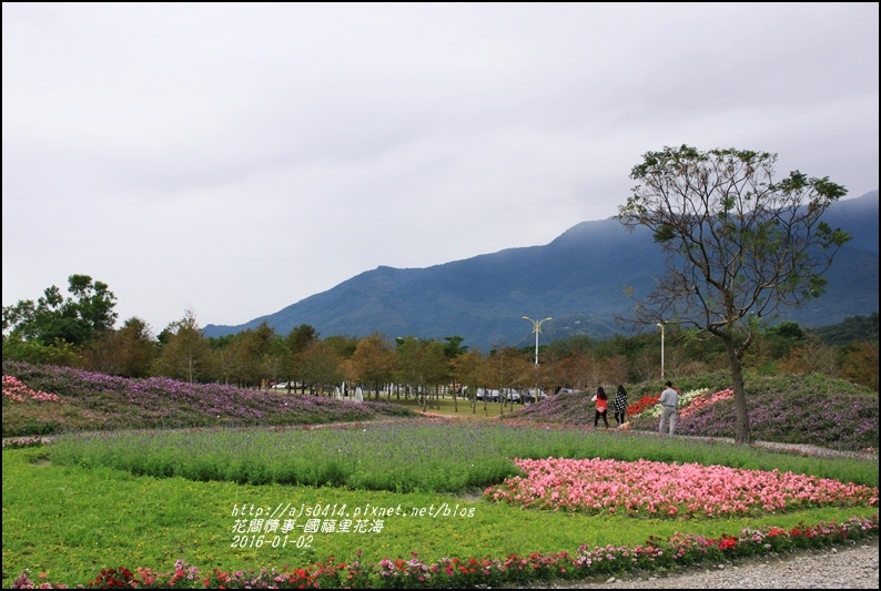 2016-01-國福里花海32.jpg