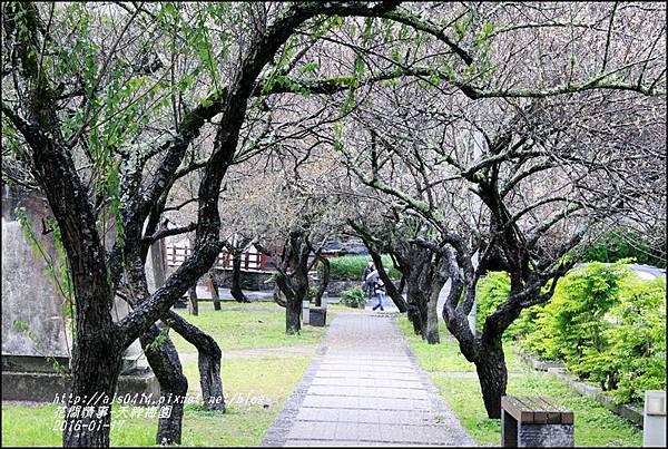 2016-01-天祥梅園1.jpg
