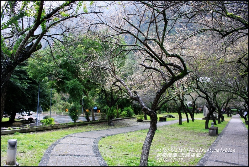 2016-01-天祥梅園6.jpg