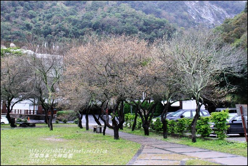 2016-01-天祥梅園13.jpg