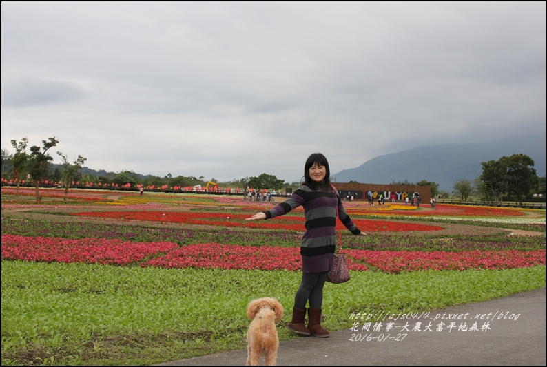 2016-01-大農大富平地森林24.jpg
