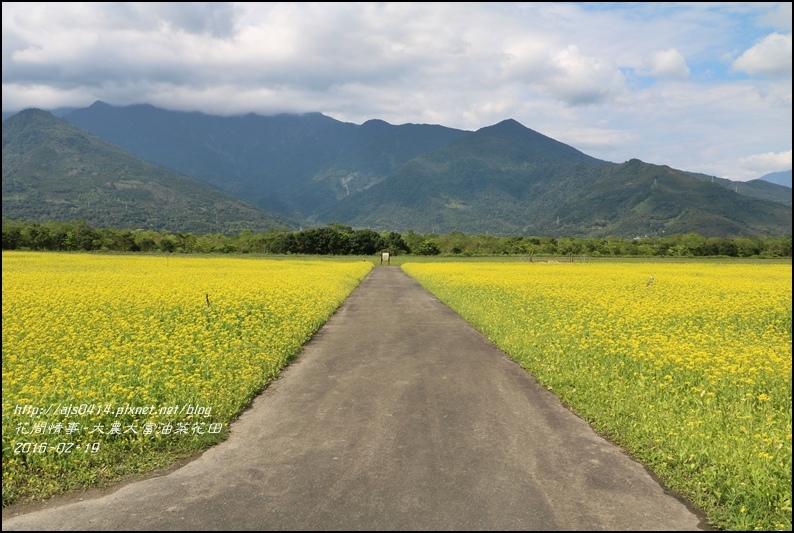 2016-02-大農大富平地森林油菜花田5.jpg