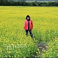 2016-02-大農大富平地森林油菜花田20.jpg
