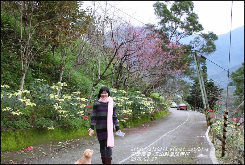 2016-01-玉山神學院櫻花7.jpg