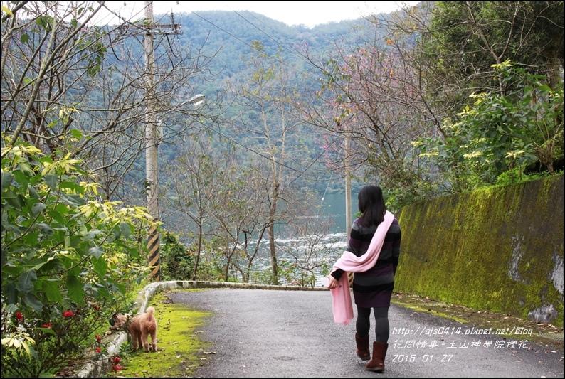 2016-01-玉山神學院櫻花10.jpg