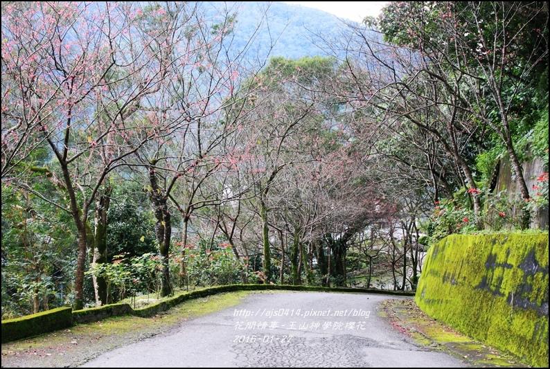 2016-01-玉山神學院櫻花15.jpg