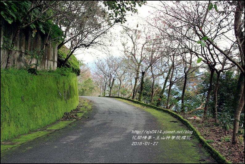 2016-01-玉山神學院櫻花16.jpg