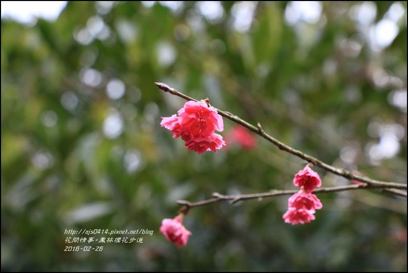 2016-02-鳳林櫻花步道11.jpg