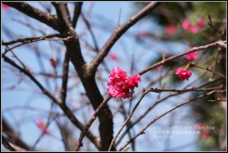 2016-03-美崙山森林公園3.jpg