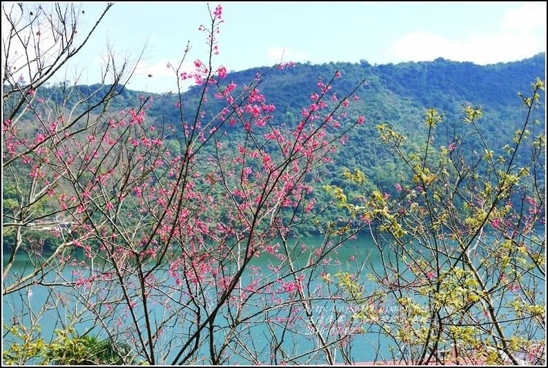 2016-03-玉山神學院八重櫻3.jpg