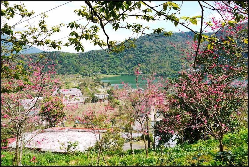 2016-03-玉山神學院八重櫻7.jpg