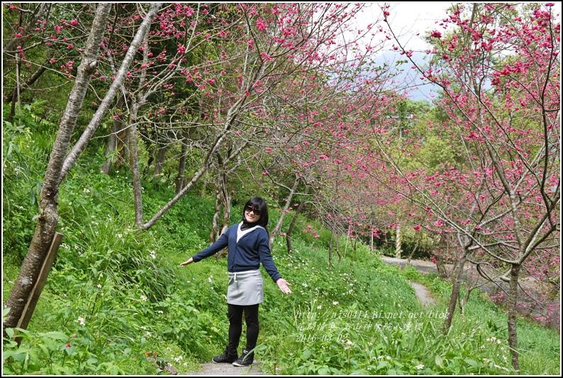 2016-03-玉山神學院八重櫻18.jpg