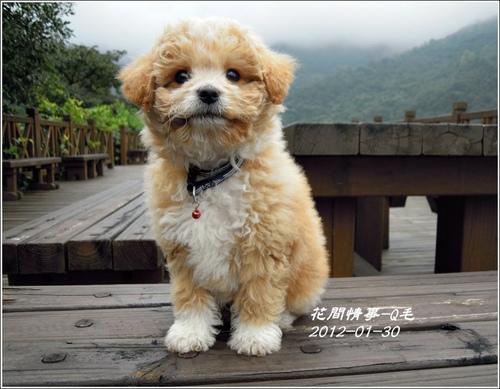 劉小Q-01.jpg