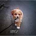 劉小Q-05.jpg