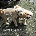 毛小孩02.jpg