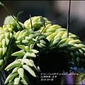 2016-04-玉串10.jpg
