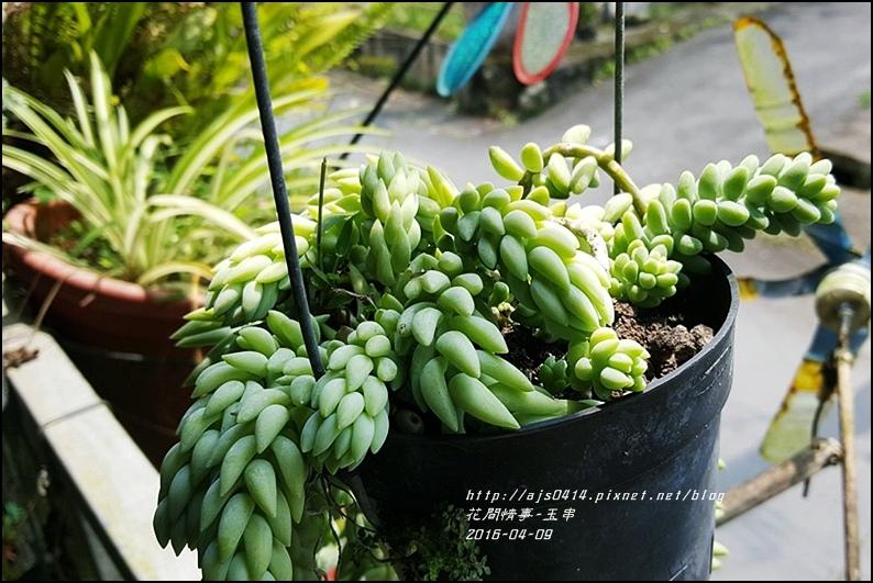 2016-04-玉串13.jpg
