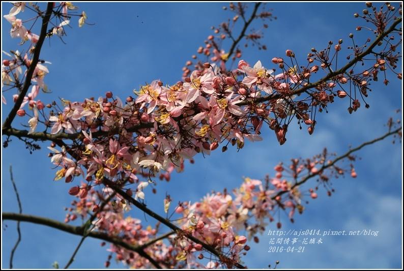 2016-04-花旗木4.jpg