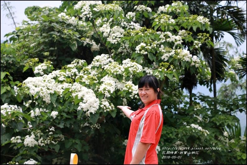 2016-05-西寶山桐花8.jpg