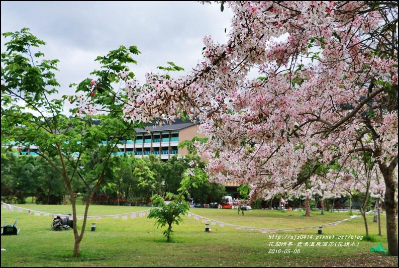 2016-05-鹿鳴溫泉洒店(花旗木)2.jpg