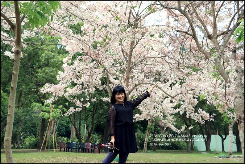 2016-05-鹿鳴溫泉洒店(花旗木)5.jpg