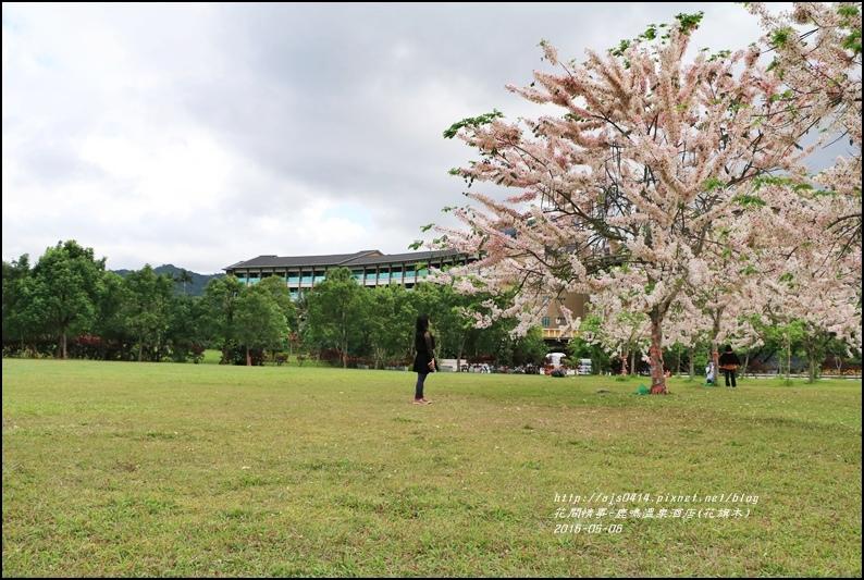 2016-05-鹿鳴溫泉洒店(花旗木)7.jpg