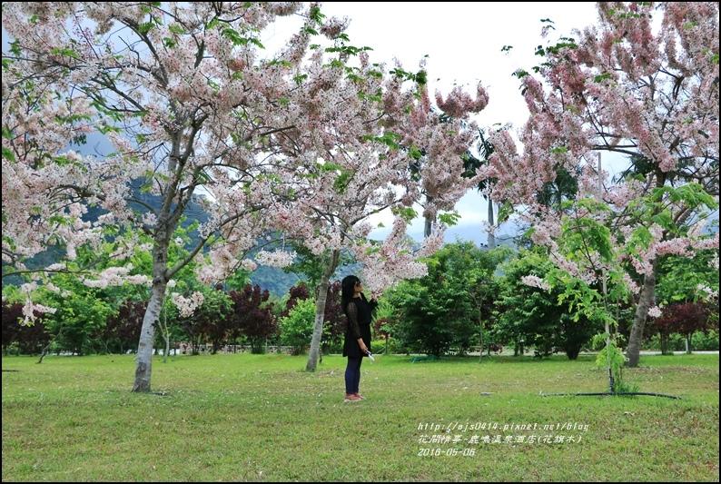 2016-05-鹿鳴溫泉洒店(花旗木)11.jpg