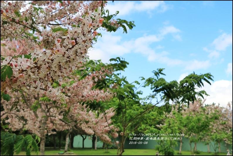 2016-05-鹿鳴溫泉洒店(花旗木)12.jpg