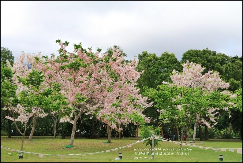 2016-05-鹿鳴溫泉洒店(花旗木)18.jpg