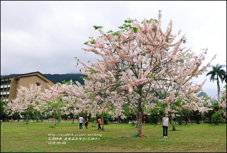 2016-05-鹿鳴溫泉洒店(花旗木)19.jpg