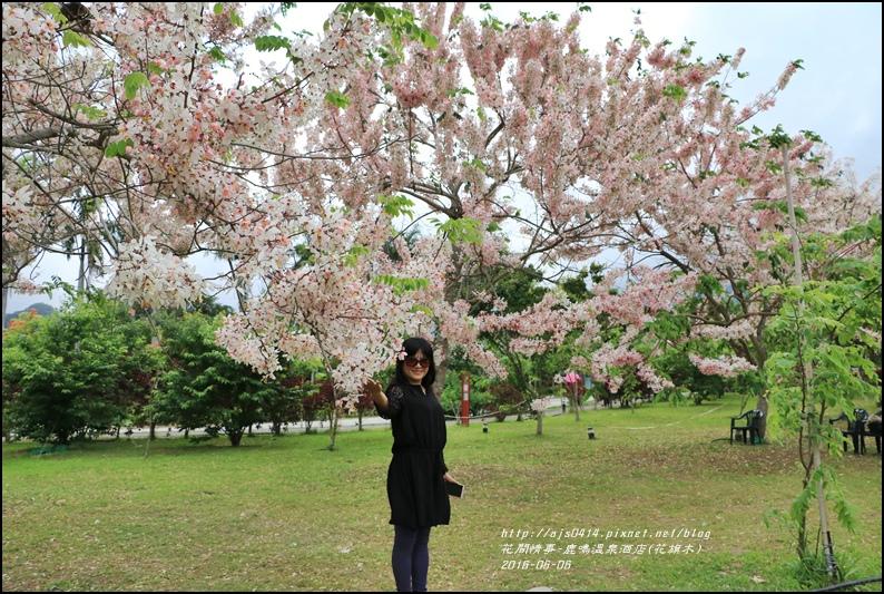 2016-05-鹿鳴溫泉洒店(花旗木)21.jpg