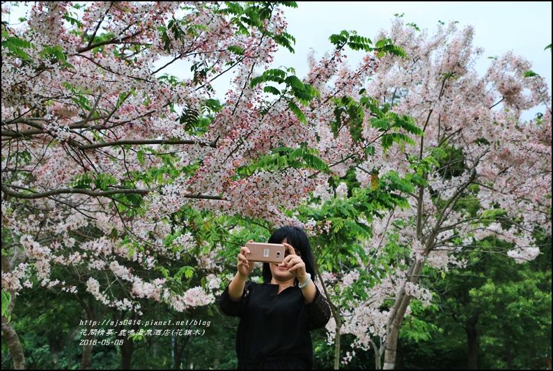 2016-05-鹿鳴溫泉洒店(花旗木)23.jpg