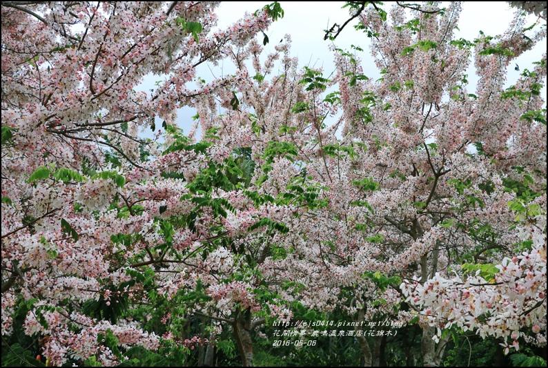 2016-05-鹿鳴溫泉洒店(花旗木)27.jpg