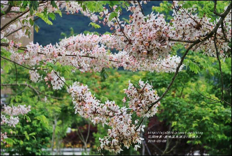 2016-05-鹿鳴溫泉洒店(花旗木)28.jpg